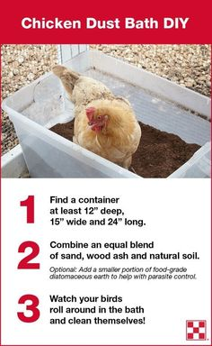 Chicken dust baths, like this dust bath at the Purina Animal Nutrition Center, help chickens stay clean. Birds have fun rolling and playing in dust baths. The processes can also help prevent external parasites like chicken lice and chicken mites. Chicken Coup, Best Chicken Coop, Chicken Coop Plans, Building A Chicken Coop, Diy Chicken Feeder, Chicken Waterer, Chicken Coop Designs, Chicken Tractors, Chicken Garden