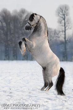..Equine horse pony equestrian caballo pferde equestrian stallion gelding mare foal