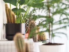 Kotilo - Divaaniblogit Cactus Plants, Cacti, Cactus