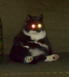 Cute Little Animals, Baby Animals, Funny Animals, Funny Cats, I Love Cats, Cool Cats, Cat Memes, Funny Memes, Sad Cat