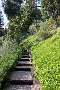 Tigertail Road, Brentwood, California - contemporary - landscape - los angeles - by katie moss landscape design Landscaping On A Hill, Landscaping Retaining Walls, Landscape Architecture, Landscape Design, Sloped Yard, Backyard Plan, Coastal Gardens, House Design Photos, Yard Design