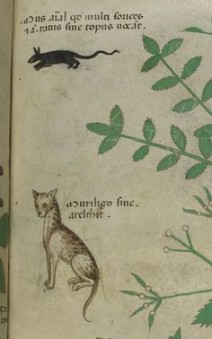 Cat and rat in a herb garden    from an herbal, Italy, c. 1440