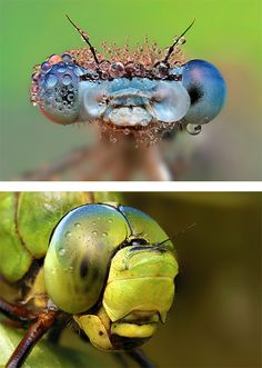 Macro Photos of Insects by Ondrej Pakan. Nature: The perfect designer.