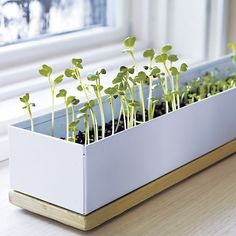 Spice Microgreens Grow Box in Home Accents | Crate and Barrel