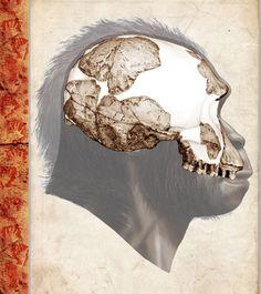 Scientific Illustration |  Homo habilis