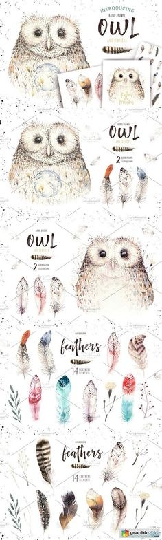 Watercolor owl & feathers collection  stock images