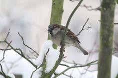 thema vogels in de winter - Google zoeken