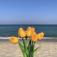 Aesthetic Themes, Flower Aesthetic, Fresh Flowers, Beautiful Flowers, Flowers Nature, My Flower, Flower Power, Blooming Flowers, Types Of Flowers