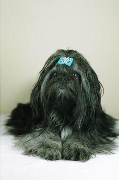 Emi   #shihTzu #dog #thebest #photosession