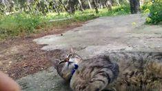 Ο Vegan Cat Whisperer.Βόλτα με γάτες. Πού βρέθηκαν τέσσερις  γάτες..?!