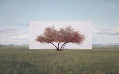 Myoung Ho Lee  Tree...#2, 2011  From the series Tree Abroad  Archival Inkjet Print