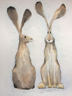 A super large sized original watercolour painting with pen detailing of two sitting hares. Just smaller than A1 this hare painting measures 57cm x 76cm, unmounted and unframed.