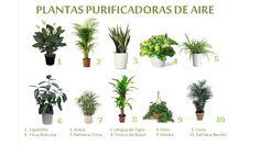 Una Casa Sana: PLANTAS PURIFICADORAS DE AIRE
