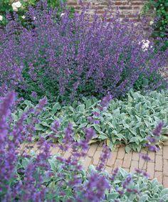 Edging Plants, Garden Edging, Lavender Garden, Purple Garden, French Cottage Garden, Lakeside Garden, Front Flower Beds, Deer Resistant Plants, Coastal Gardens