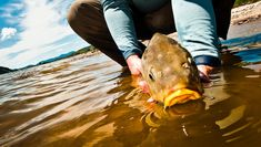 12 q and a's about carp fly fishing Fly Fishing For Carp, Fly Fishing Basics, Trout Fishing, Carp Flies, Common Carp, Fly Casting, Fly Rods, Sea Fish, Fly Tying