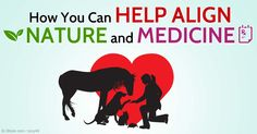 The AHVMF has made amazing strides acquiring funding and launching integrative veterinary medicine education and research initiatives. http://healthypets.mercola.com/sites/healthypets/archive/2015/03/21/american-holistic-veterinary-medical-foundation.aspx
