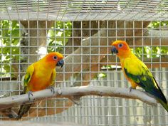 Selecting the proper sized bird cage for the bird's enjoyment and safety is the…