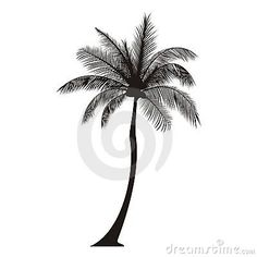 Palm Tree Silhouette Royalty Free Stock Images - Image: 24310719