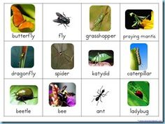 Various bug themed printables