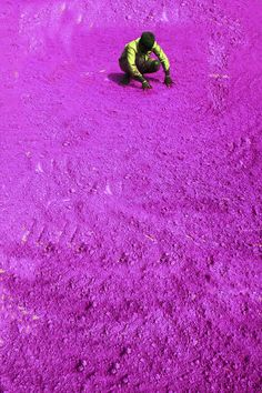 A worker dries colored powder in preparation for the Holy festivities in New Delhi, India.