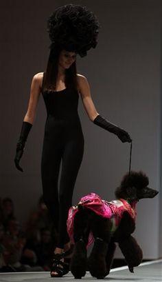 high fashion pet