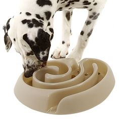 Maze Dog Food Bowl - Slows Rapid Eating... Might need to get this for my new puppy who has to fight his 9 brothers and sisters for food!