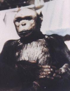 "Oliver, the ""Humanzee"": a human-chimp hybrid"