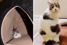7 Amazing Flower Memes Images Funny Animals Dog Cat