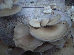 Μανιτάρια καλλιέργεια Stuffed Mushrooms, Vegetables, Food, Decor, Stuff Mushrooms, Decoration, Essen, Vegetable Recipes, Meals