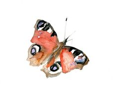 watercolor paintings of butterflies | watercolor painting of a vanessa butterfly. Zen drawing. Butterfly ...