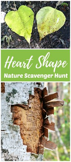 A heart shape nature scavenger hunt is a fun activity for kids, families, and school groups. Get outside on a nature hunt to see how many hearts you can find in the wild. Don't forget to take pictures of all of the heart-shapes you find with your camera! Creative Activities For Kids, Nature Activities, Creative Kids, Crafts For Kids, Nature Hunt, All Nature, Walking In Nature, Outdoor Activities For Kids, Outdoor Learning