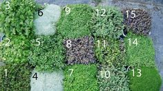 13 of the best New Zealand native ground cover plants Spread a little love around with native groundcovers.