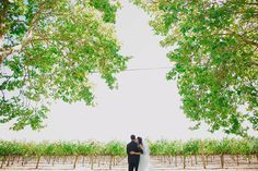 Yvonne Wong Photography: Olivia and Dan (Beaulieu Garden)