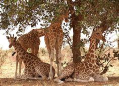 W National Park im Burkina Faso Reiseführer http://www.abenteurer.net/1334-burkina-faso-reisefuehrer/