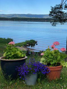 Cottage, Plants, Summer, Casa De Campo, Summer Time, Flora, Cabin, Plant, Cottages