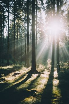 Landscape & Nature : Фото