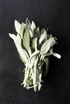Salvia Officinalis / by Petra Bindel Spices And Herbs, Fresh Herbs, Fresh Fruit, Lambs Ear, Food Styling, Food Art, Planting Flowers, Herbalism, Food Photography