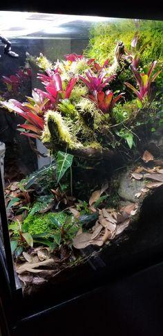 Amphibians, Reptiles, Aquarium, Reptile Terrarium, Tropical, Aquascaping, Toad, Water Features, Habitats