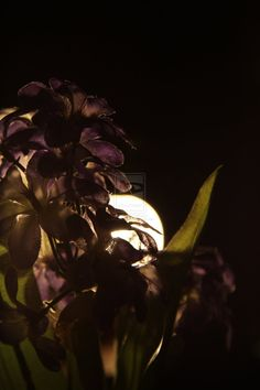 Photography with fake flowers and movie lighting!