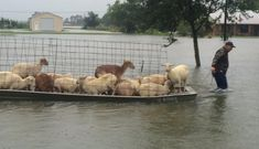 People are risking their lives to save animals from Louisiana Floods! For the love of animals. Pass it on.
