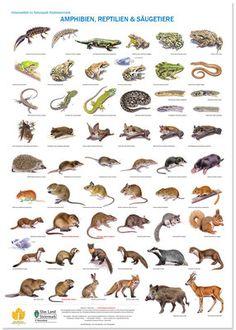Bird posters, garden birds, woodland birds, farmland birds | Vogelposter, Gartenvögel, Waldvögel, Feldvögel