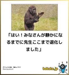 人前での閲覧注意な笑えるボケて(bokete)画像 - See Tutorial and Ideas Funny Animal Memes, Funny Animals, Funny Jokes, Hilarious, Funny Photos, Funny Images, Japanese Funny, Robin, Funny Illustration