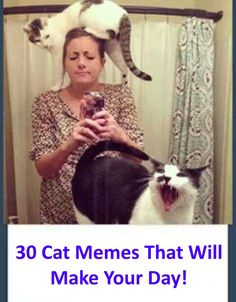 These 28 Cat Memes Will Make Your Day! - Crazy Cat Lady Supplies