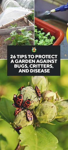 26 Tips to Protect Your Garden Against Bugs, Critters, and Disease