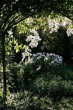 """Rose arbor in Sissinghurst's White garden room, which set a fashion for """"white gardens"""""""