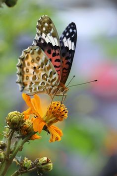 Butterfly Garden and Insect World in Phuket, Thailand