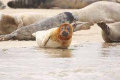 Blakeney Seal Trips, North Norfolk