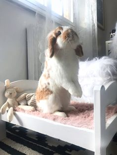 Our goal is to keep old friends, ex-classmates, neighbors and colleagues in touch. Cute Baby Bunnies, Baby Animals Super Cute, Cute Little Animals, Cute Funny Animals, Cute Bunny Pictures, Cute Animal Photos, Animal Pictures, Pet Bunny Rabbits, Pet Rabbit