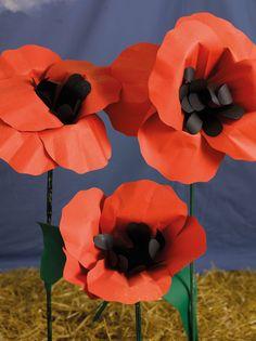 field-of-poppies-rh_00381 620