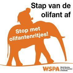 Heel veel Nederlandse reisorganisaties bieden nog olifantenritjes aan. WSPA roept hen op hiermee te stoppen! Re-pin als je het hiermee eens bent.
